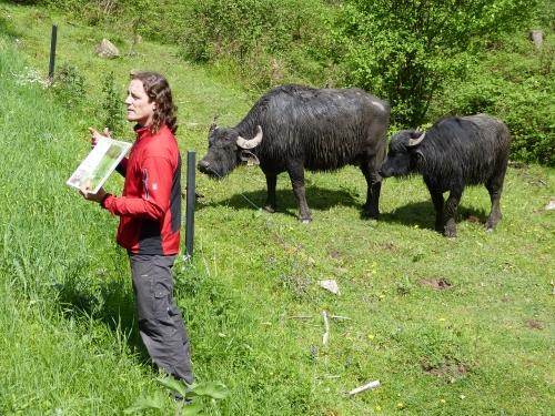 Fuehrung Windheim C.Salomon 8.5 13 Orchideenwiesen und Wasserbüffel bei Windheim