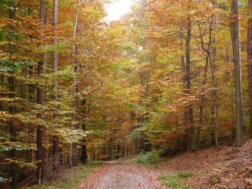 Herbst Julian Bruhn Veranstaltungsprogramm im November