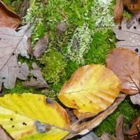 Herbst im Wald (Foto: O. Kaiser)