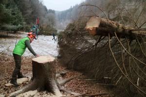IMG 7824 300x200 Naturschutzmaßnahmen im Kaltenbachgrund