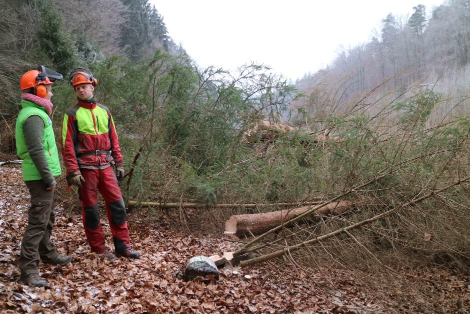 IMG 7837 940x627 Naturschutzmaßnahmen im Kaltenbachgrund