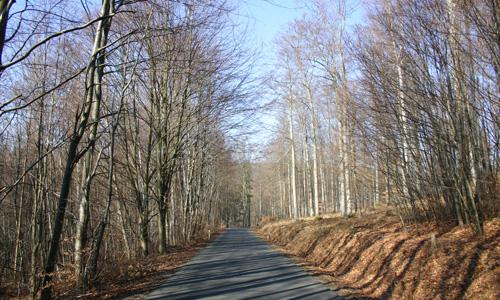 Laublose Baeume Bäume und Sträucher des Waldes im unbelaubten Zustand erkennen