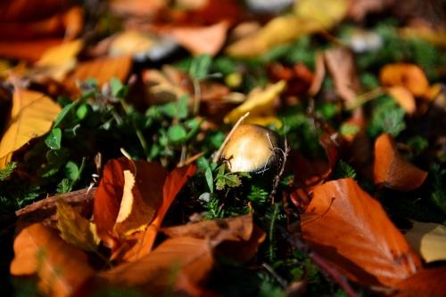 MM Herbstlaub Auf nackten Sohlen durch den Wald