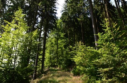 MM Nadelhölzer Graswaldboden Natur rings um Wiebelbach