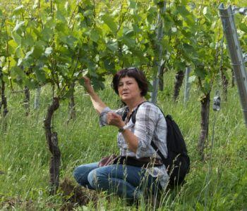 Marita Prechtl1 Weinberge sind keine Hochleistungsplantagen