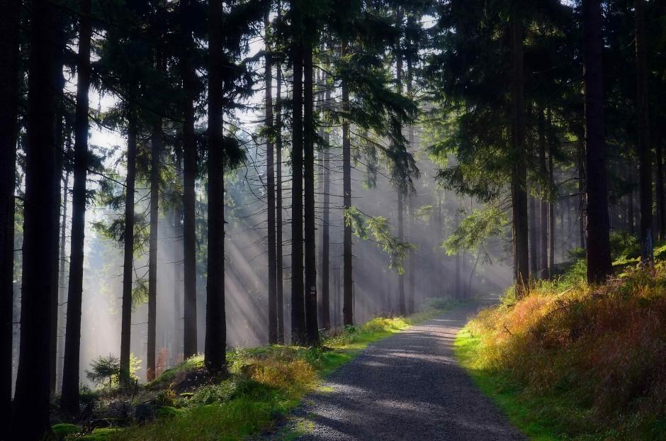 Morgenstimmung im Steinwald c VDNHans Jürgen Schmidt Steinwald 940x622 Naturerleben rund um den Walderlebnispfad