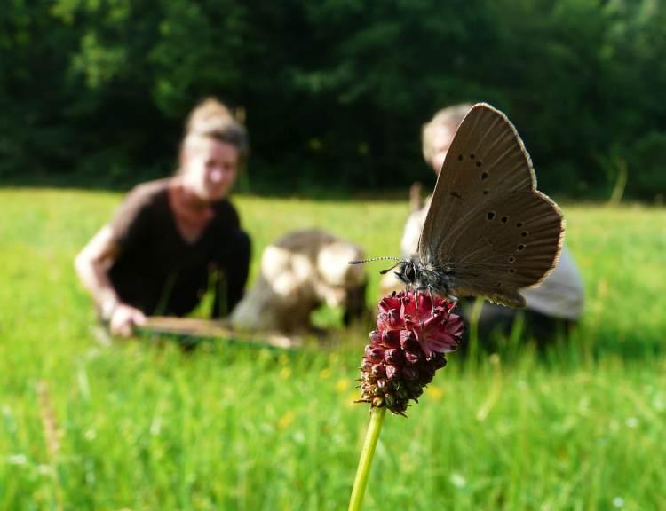 NSG Spessartwiesen Salomon Fokus Ameisenbläuling Erfolgreiche Exkursion in das Schutzgebiet Spessartwiesen