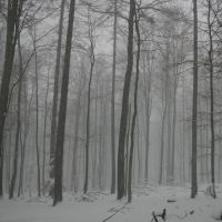 NSG Rohrberg 12.02.2009 200x200