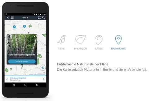 Naturblick Naturkundemuseum Berlin Beitrag Mit der App Arten bestimmen