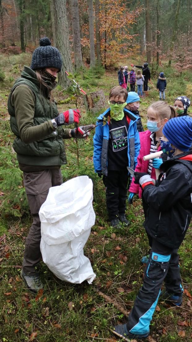 Naturpark Schule Partenstein Baumpflanzen 2 620x1102 Grundschüler pflanzen Bäume im Partensteiner Wald