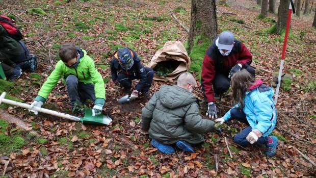Naturpark Schule Partenstein Baumpflanzen 3 620x349 Grundschüler pflanzen Bäume im Partensteiner Wald