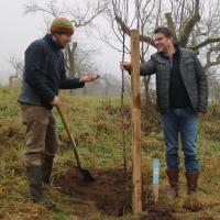 Pflanzung des ersten Hochtamm-Obstbaumes (Foto: J. Bruhn)