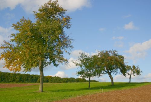 Obstbäume vonAustausch Rund um die Streuobstwiese im Herbst