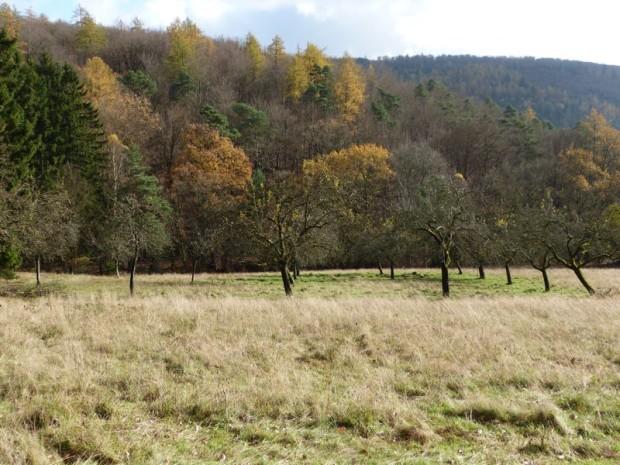 Partenstein Hirtelswiese NP 11.11 4 620x465 Landschaftsputz in Heimbuchenthal – freiwillige Helfer pflegen Streuobstwiesen