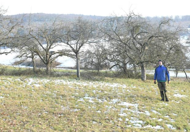 Pflegeschnitt an Obstbäumen in Mönchberg Jan2021 2 620x430 Streuobstpflege in Mönchberg und Schmachtenberg