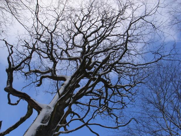 RIMG1581 620x465 Die Körpersprache der Bäume   Unterwegs mit dem Ranger