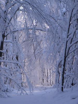 Verzaubertre Winterlandschaft Naturschutzgebiet Rohrberg