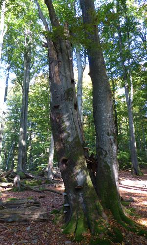 Rohrbergbild Naturschutzgebiet Rohrberg wird 90