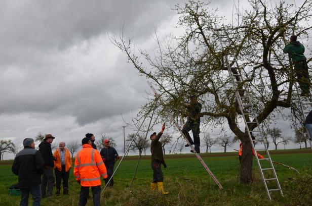 Schnittkurs Schlaraffenburger Schnittkurs Ertrags  und Altbäume in Mömbris