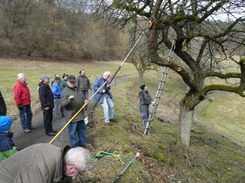 Schnittkurs des Grünlandprojekts Dammbach 1 Schnittkurs für alte Apfelbäume traf auf großes Interesse