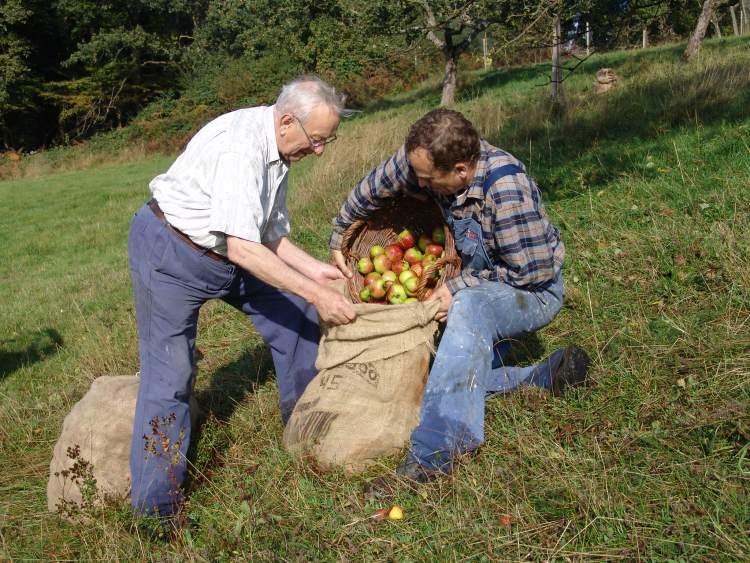 Seite 7 8 Apfelernte Michael Kunkel mit seinem Vater Herbstzeit ist Erntezeit