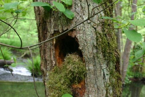 Spechthöhle Hafenlohrtal Hubertus Naturpark Spessart Der Specht, Baumeister des Waldes!