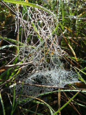 Spinnweben Oliver Kaiser Veranstaltungen im September