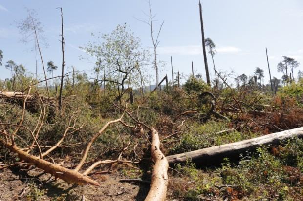 Sturm... 620x413 Sturmschäden in Alzenau