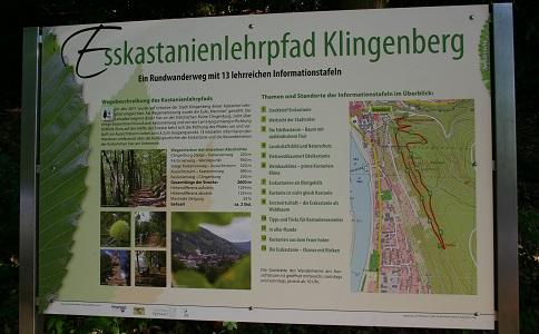 Tafel Esskastanienpfad Esskastanien Lehrpfad Klingenberg