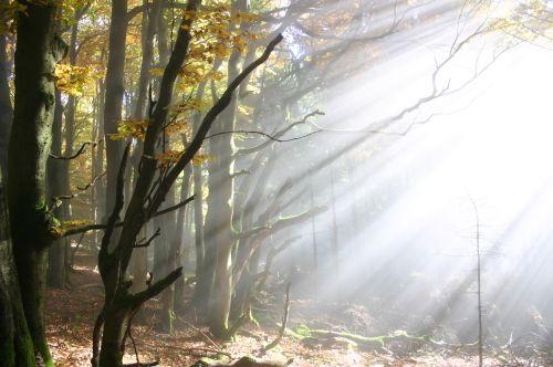 Wald Stimmung Meditativer Waldspaziergang in Gemünden