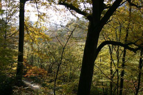 Wald Natur erleben rund um den Bauwagen   Zu Besuch bei den Waldwichteln