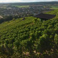 Wein_200x200