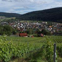 Weinführung 200x200 (Foto: Marita Prechtl)Weinführung 200x200 (Foto: Marita Prechtl)