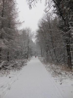 Winterlicher Wald (Foto: Thoralf Dietrich)