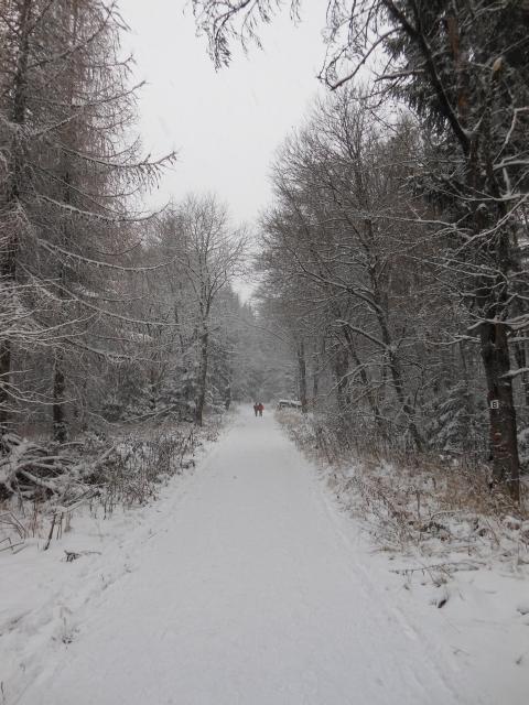 Winterbild Thoralf Dietrich Vorspessart Winterwanderung