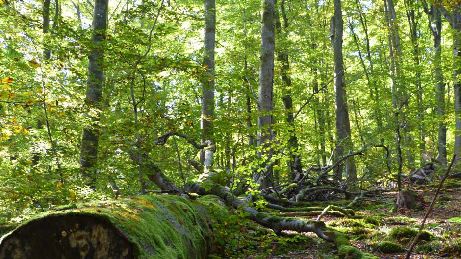 all buchenwald 940x529 Ruhe finden   Kraft schöpfen   Meditative Waldwanderung