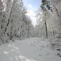 Bei Rechtenbach 12.02.2009