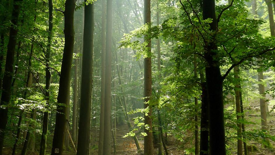 boehm geheimes leben 940x529 Das geheime Leben der Bäume