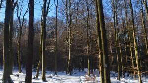 frucht_mysterium_winterwald