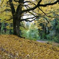 NSG Herbstbilder 08.10.2008