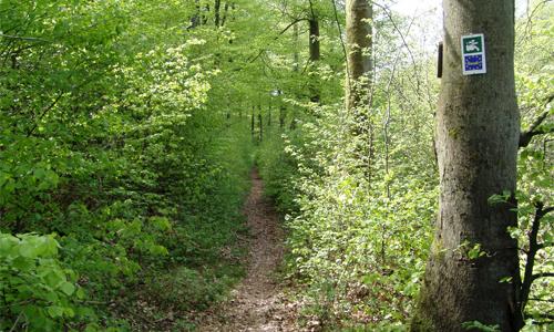 hochspessart 1 Flora Fauna Habitat Gebiet Hochspessart
