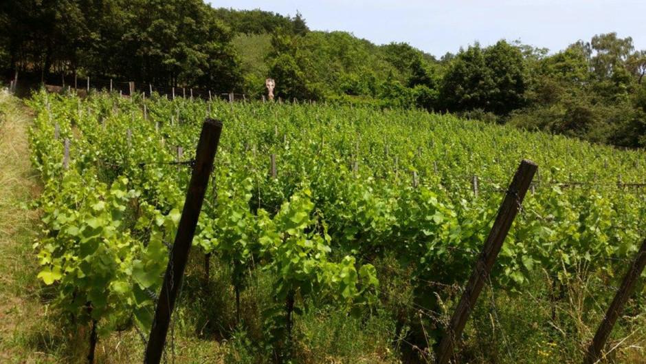 lampert weinbau 940x529 Gemündener Weinbaugeschichte
