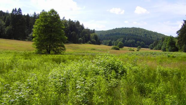 maier weihersgrund 620x349 Exkursion zum Naturschutzgebiet Weihersgrund