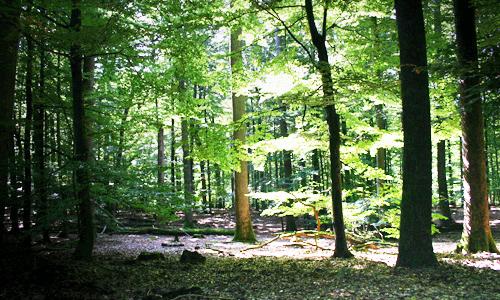 naturwaldreserv2att 1 Erkunden Sie das Naturwaldreservat Schubertswald