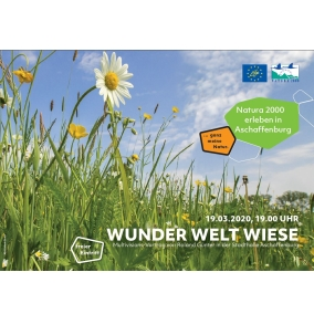 wunder_welt_wiese200x200