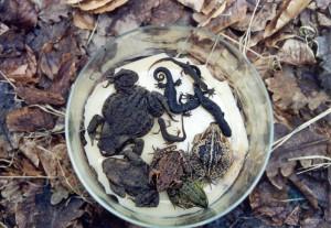 Amphibien im Behälter