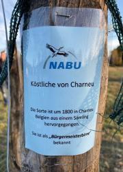 Bürgermeisterbirne Netta Baumann NABU Heinrichsdorf pflanzt Streuobst