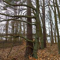 NP SRL/Archiv Naturwacht Stechlin-Ruppiner Land