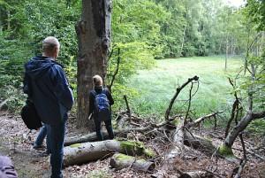 Blick ind Dagowseebruch 300x201 Bereisung des EU Life Projektes Feuchtwälder
