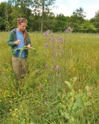 Botanisches Monitoring 0149 Botanisches Monitoring im Naturpark Stechlin Ruppiner Land